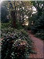 SZ1094 : Strouden: ivy-clad tree stump on footpath K18 by Chris Downer