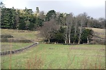 TQ1549 : Rough pasture by N Chadwick