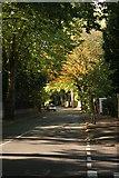SJ7886 : Planetree Road, Hale by Richard Sutcliffe