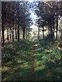 SP9334 : Around Old Wavendon Heath by Dave Thompson
