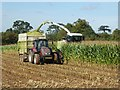 SO8746 : Maize harvesting by Philip Halling