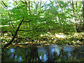 SX8288 : River Teign near Sowton Mill by Stephen Craven