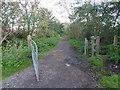 TQ2392 : Burtonhole Lane by Marathon