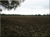 SU1895 : Farmland near Hannington Wick by David Purchase