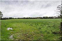 R5505 : Field west of minor lane by David P Howard