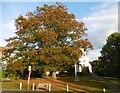TQ5259 : Autumn colours starting to show at Otford by Marathon