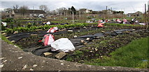SO8700 : Southwest corner of Minchinhampton Allotments by Jaggery