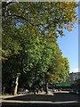 ST5774 : Trees along Alma Road, Bristol by Derek Harper