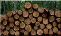 SU9295 : Penn Wood logs by Robert Eva