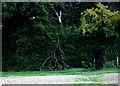 SU9295 : Priestland's Wood by Robert Eva