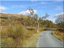 NH1101 : The road from Kinloch Hourn by Oliver Dixon