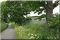 TQ1968 : Oaks along the London Loop by Derek Harper