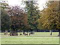 ST8083 : Deer in the rutting season, Badminton Deer Park by Vieve Forward