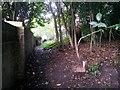 SZ1094 : Strouden: footpath K06 runs behind East Way backyards by Chris Downer