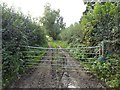 SO4860 : Farmland access track by Philip Halling