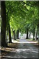 SO4565 : Tree-lined drive, Croft Castle by Philip Halling