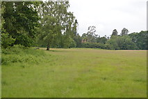 TQ5245 : Meadow by N Chadwick
