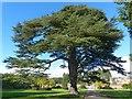 ST2885 : Cedar of Lebanon, Tredegar House Gardens, Newport by Robin Drayton