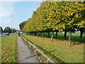 SE3036 : Trees alongside Scott Hall Road, Leeds by Humphrey Bolton
