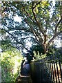 SZ1491 : Tuckton: footpath I12 goes beneath a large tree by Chris Downer
