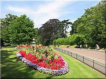 ST7465 : Flowers in the park by Des Blenkinsopp