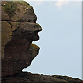 NT9464 : A rock face at Eyemouth Point by Walter Baxter