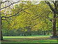 TQ2879 : Sunlit leaves in Green Park by Free Man