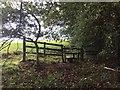 SJ8352 : Woodland path emerges onto field near Kidsgrove by Jonathan Hutchins
