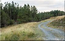 NR3858 : Estate road on north side of plantation by Trevor Littlewood