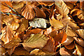 J3268 : Autumn leaves, Minnowburn, Belfast - October 2016(4) by Albert Bridge