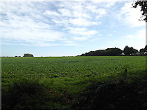 TG0723 : Farmland off Old Lane by Adrian Cable