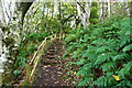 NS2209 : Steps on the Cliff Top Path, Culzean by Billy McCrorie