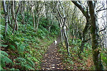 NS2209 : Dog on the Cliff Top Path, Culzean by Billy McCrorie