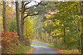 NT1635 : Minor road junction in the trees by Jim Barton