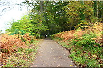 NS2209 : Trail to Culzean Castle by Billy McCrorie