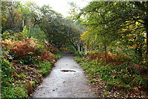 NS2209 : Trail to the Swan Pond, Culzean by Billy McCrorie