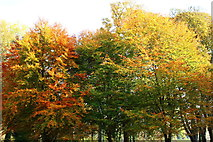 NS2209 : Autumn Colour at Culzean Country Park by Billy McCrorie