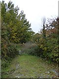 SX9289 : Old gate and track covered with scrub, Marsh Barton, Exeter by David Smith