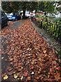SX9065 : Fallen leaves, Parkhurst Road, Torquay by Derek Harper