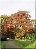 SD6911 : Path in Smithills Hall grounds by Philip Platt