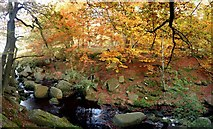 SK2579 : Autumn colour by Burbage Brook by Graham Hogg