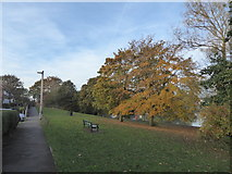 SJ7744 : Grass and trees by Madeley Pool by Jonathan Hutchins