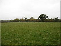 SU0491 : Farmland west of Leigh by David Purchase
