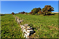 NY5021 : Ruined limestone dry stone wall near Helton by Mick Garratt