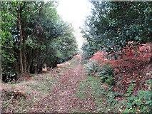 J3829 : Forest path descending towards Seacliff Close by Eric Jones