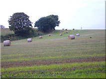 SO8881 : Bales of Hay on Iverley Hay Farm by Stephen Rogerson
