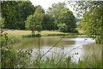 TQ5344 : Lake, Penshurst Park by N Chadwick
