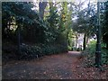 SZ0891 : Bournemouth: looking down footpath B17 by Chris Downer