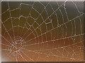 SJ7054 : Spiders web by Andrew Tatlow