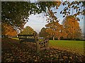 ST2988 : Autumn on Ridgeway, Newport by Robin Drayton